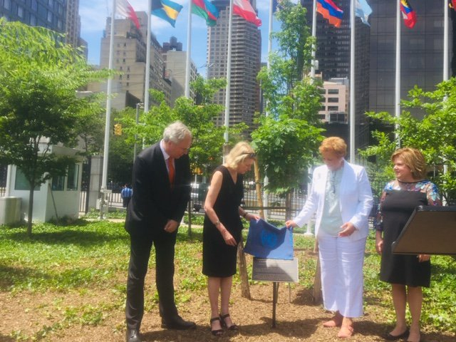 On the day that would have been #AnneFrank's 90th birthday, Ambassador @KvanOosterom attended a ceremony at #UNHQ. The @UN honored Anne Frank's legacy by dedicating a sapling donated by @AnneFrankCenter  #AnneFrank90 see:  https:// bit.ly/2wP6mZV     <br>http://pic.twitter.com/KHgEncDDhN