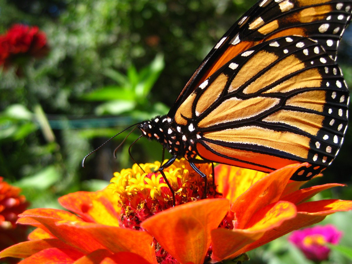 test Twitter Media - We delight in the beauty of the butterfly, but rarely admit the changes it has gone through to achieve that beauty. — Maya Angelou  #amwriting #writingcommunity #fantasyfan https://t.co/9or9AE7wXh