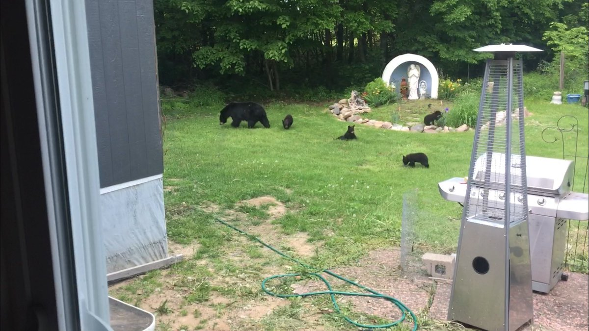 Myron is having a bear -tastic week! He tells us they stop by regularly.   The birds are not so happy since they are eating most of their goodies!   Thanks Myron for sharing from the Taylor Falls area.  #kare11weather