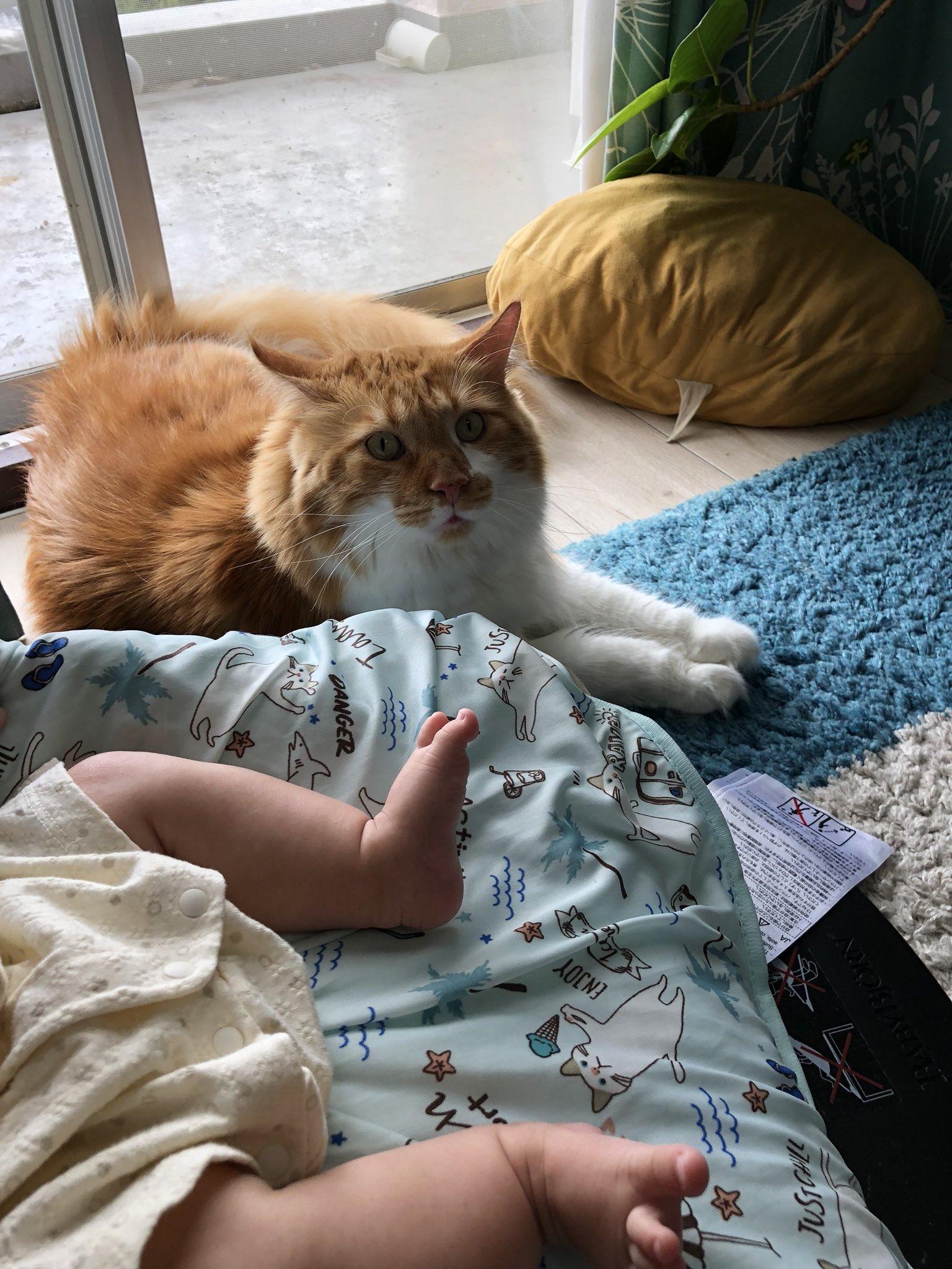 赤ちゃんの子守を手伝ってくれてる猫ちゃんたち♡