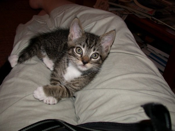 Tenth anniversary of @Rudy_Dudley arriving at our house. @BitchestheCat, it's clear Rudy was a paw work prodigy from day 1. <br>http://pic.twitter.com/536MqZDQHu