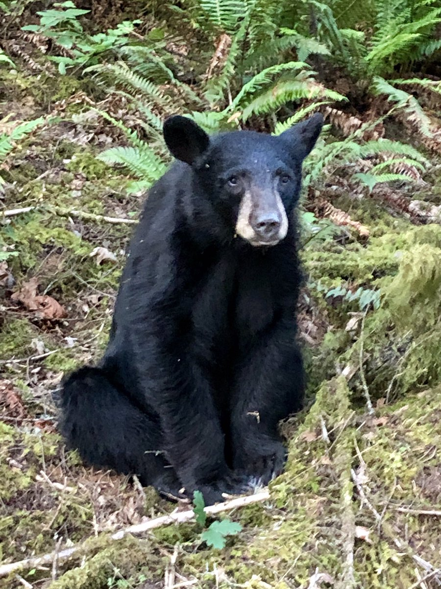 """Oregon officials kill American black bear because it """"habituated,"""" became too friendly after humans took selfies with it and fed it food near lake"""