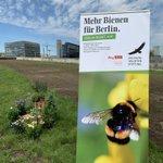 Image for the Tweet beginning: Mehr #Bienen für Berlin- #Berlinblühtauf.