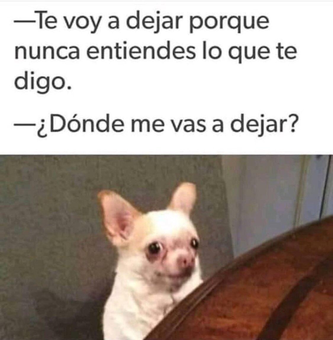 Feliz Jueves Feliz Jueves Buenosdias Mascotas Dory