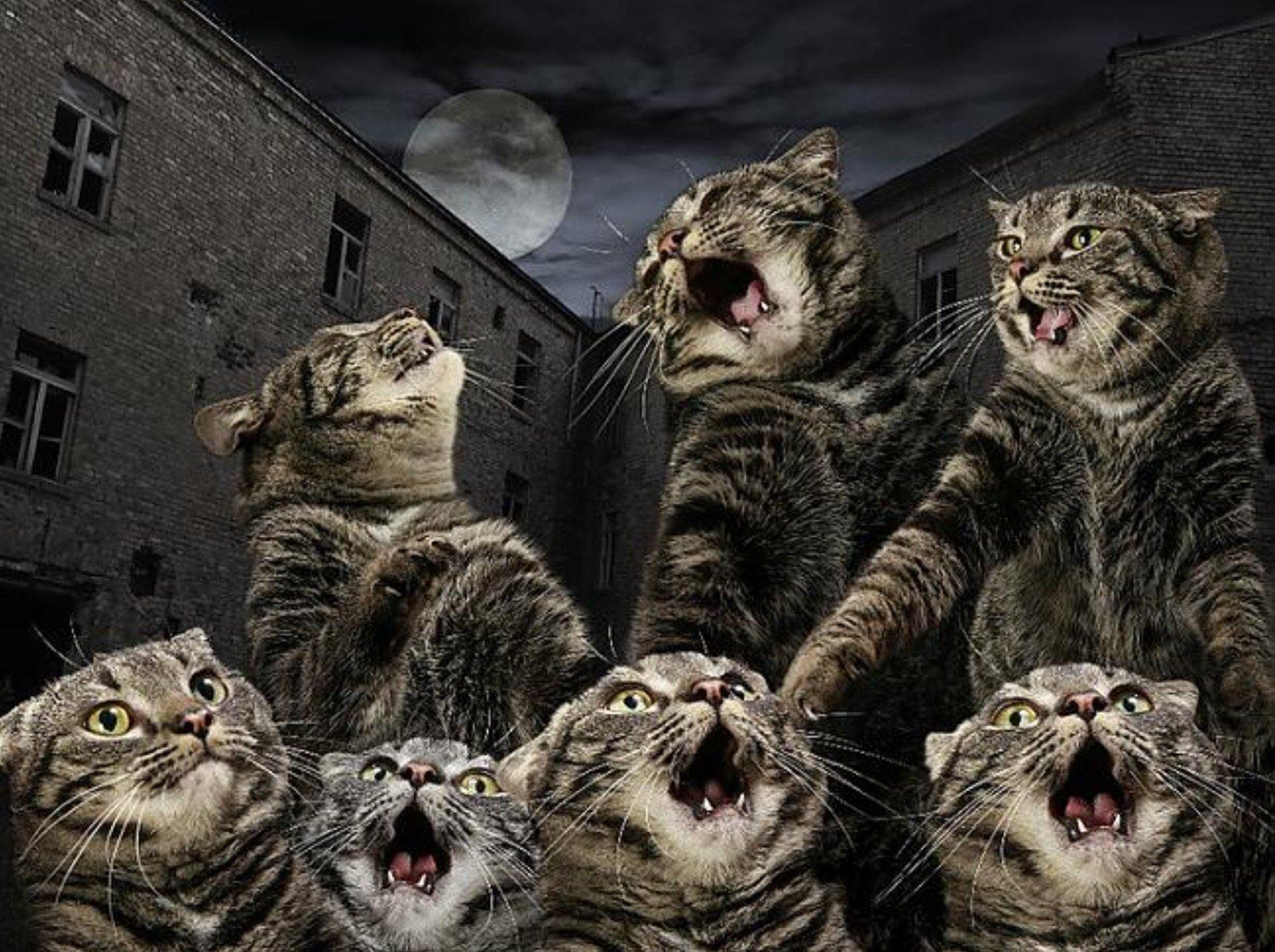 Коты санкт-петербурга, мартовский кот картинки прикольные