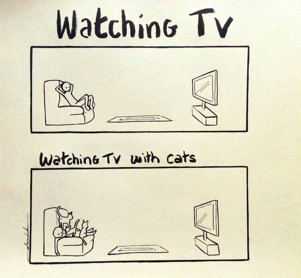 Watching TV with cats https://t.co/kM1Ea2UO1P https://t.co/sH4teGQPKS
