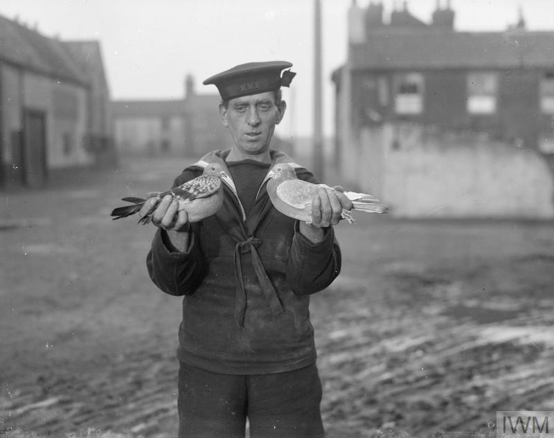 It's #NationalPigeonDay! Pigeons were an important part of military signals in both World Wars seen here with a Sailor with pigeons in #WW1, a Western Front Royal Engineers Pigeon Loft & a #WW2 Pigeon station in Italy in 1943.<br>http://pic.twitter.com/t05H8FD18x