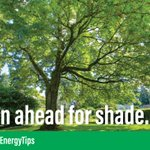 Plant trees, vines and shrubs to provide cooling summer shade. 🌳 Air temperatures can be up to 25 degrees cooler under trees. #EnergyTip