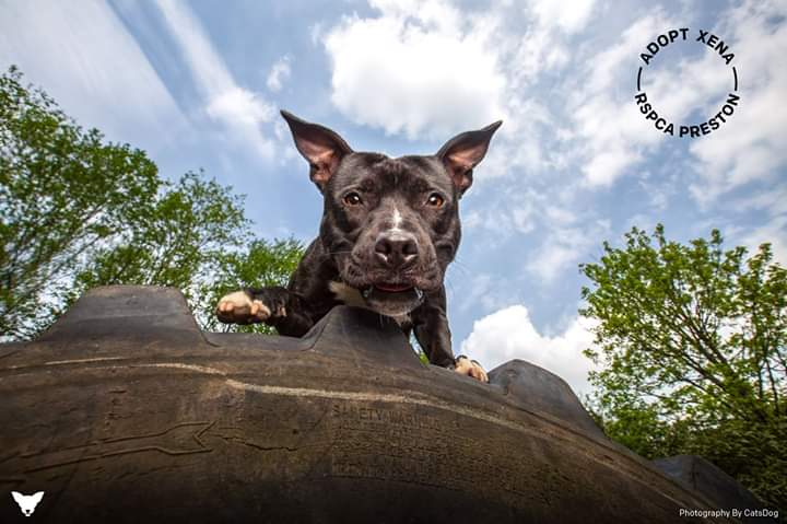 Last one for now..I promise!! Last but not least a big thank you again to @catsdogphoto for taking some stunning pictures of our animals a couple of months ago. Here is just one of the examples! Jaw dropping of our girl Xena who has now been rehomed 😍🐶 #ThankYou #Lancashirehour