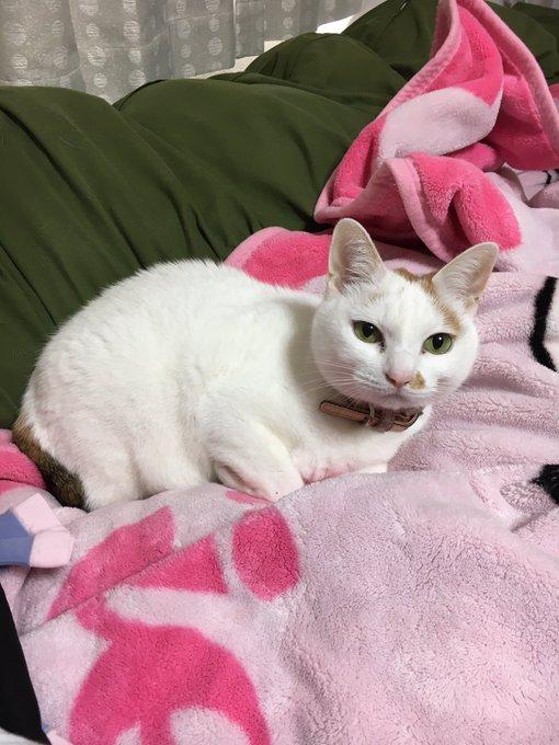 以前、うちの猫の食欲がなくなった。口元までフードを持っていって手のひらから与えると食べる。病気を疑って病院に連れて行って検査するも異常はなく「ただの甘えですね」と言われた猫がこちらになります。