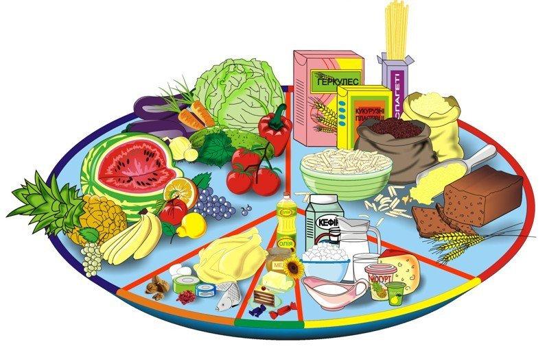 Детям о еде в картинках