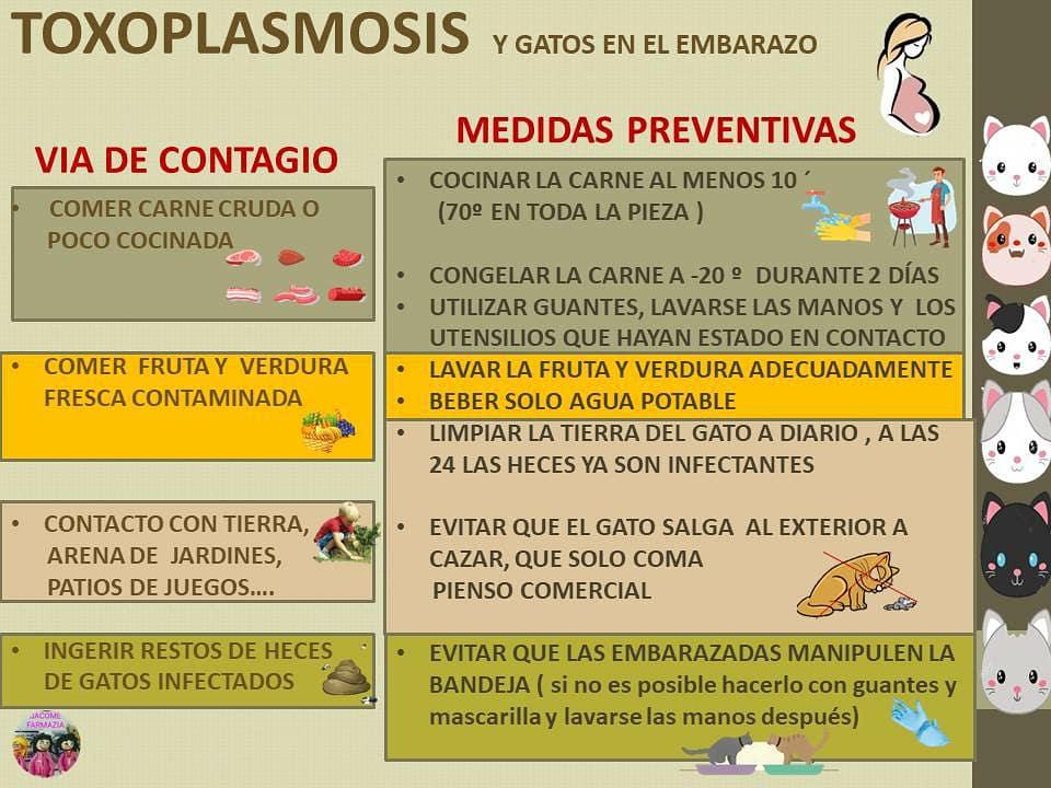 toxoplasmosis contagio