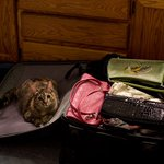 Image for the Tweet beginning: Philomena is packing for the