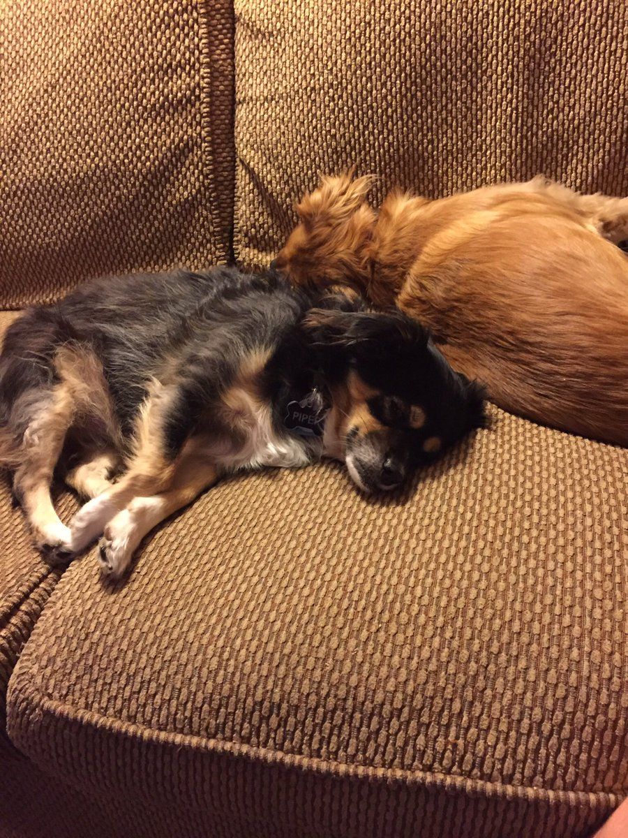 @tbertramFZN @julnilsmith My dogs are similar in color!