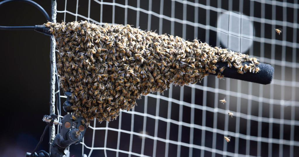 Swarm of bees delays MLB game in San Diego https://t.co/WZYpOKHmYa https://t.co/hHUn1uRafj