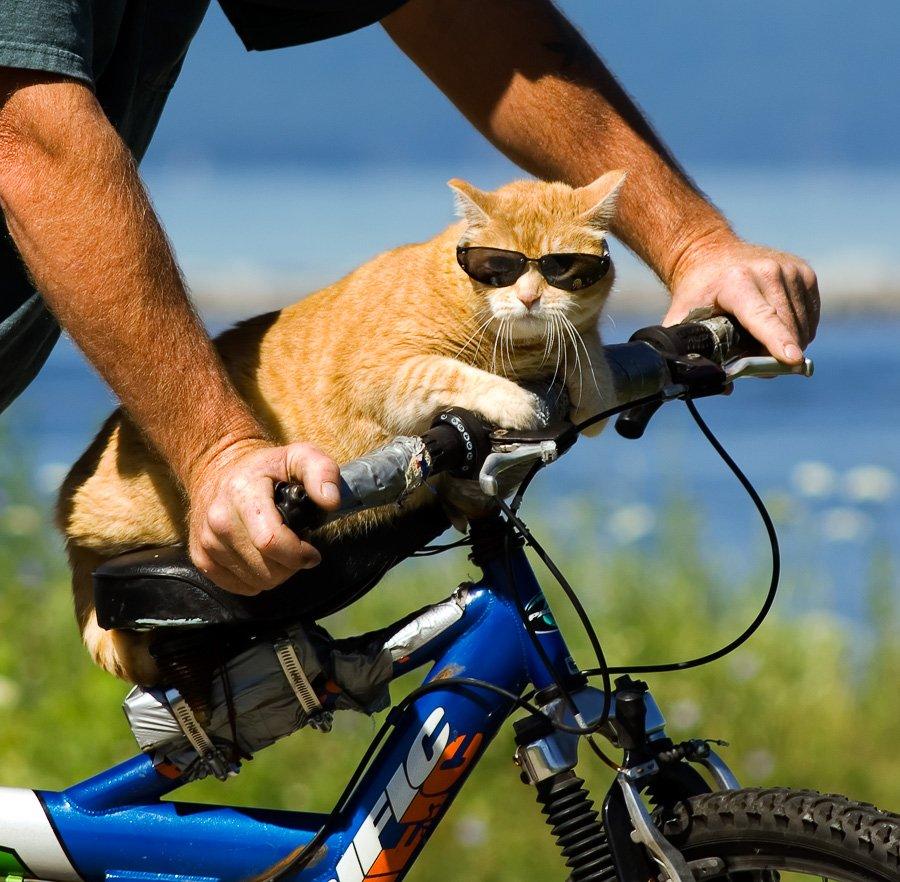 Картинки смешной велосипед, тебя любим