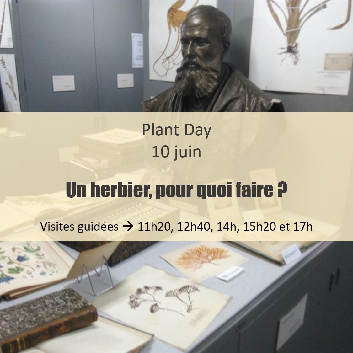 Venez visiter l'incroyable collection végétale de l'Herbarium de @UniversiteLiege. Plus de 200 échantillons provenant des quatre coins du monde. Institut de Botanique, B22, ULiège Faculté des Sciences http://www.events.uliege.be/plantday/programme/… #PlantDay #Herbarium
