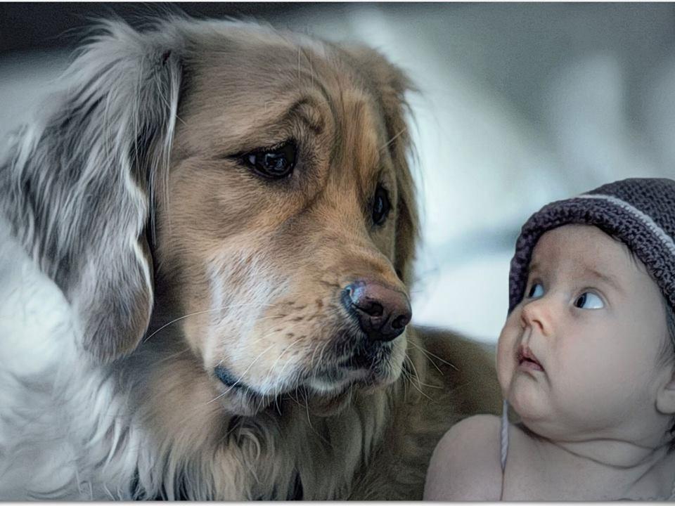 Рождения, картинки животные и дети с надписями