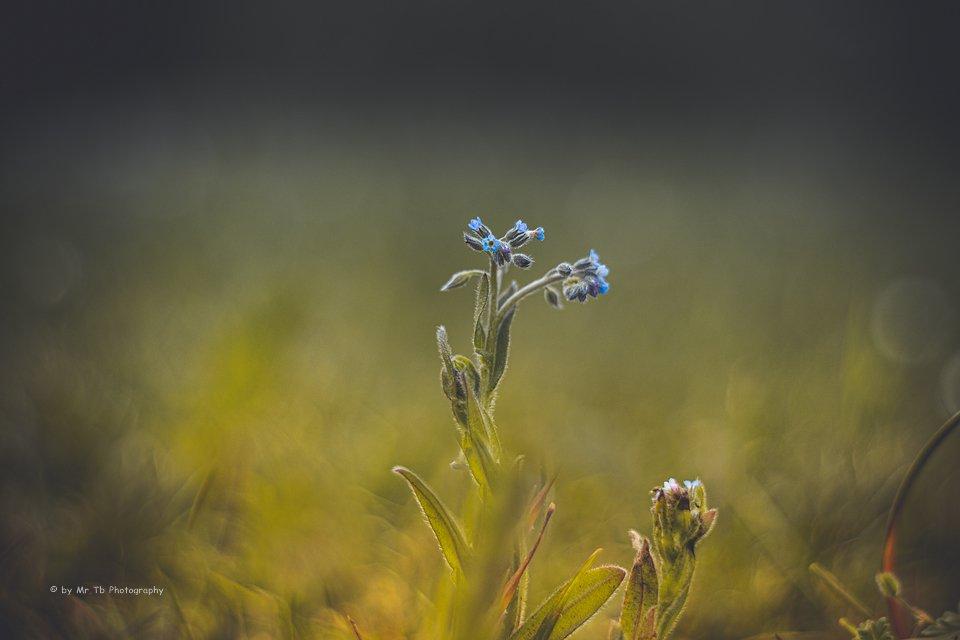 Zwischen den Gräsern 📷  #kiel #bokeh #bokehlicious #nature #photography #pentacon #pentacon50mm #50mm #lightroom #deviantart #500px #vintagelens #picoftheday #germany