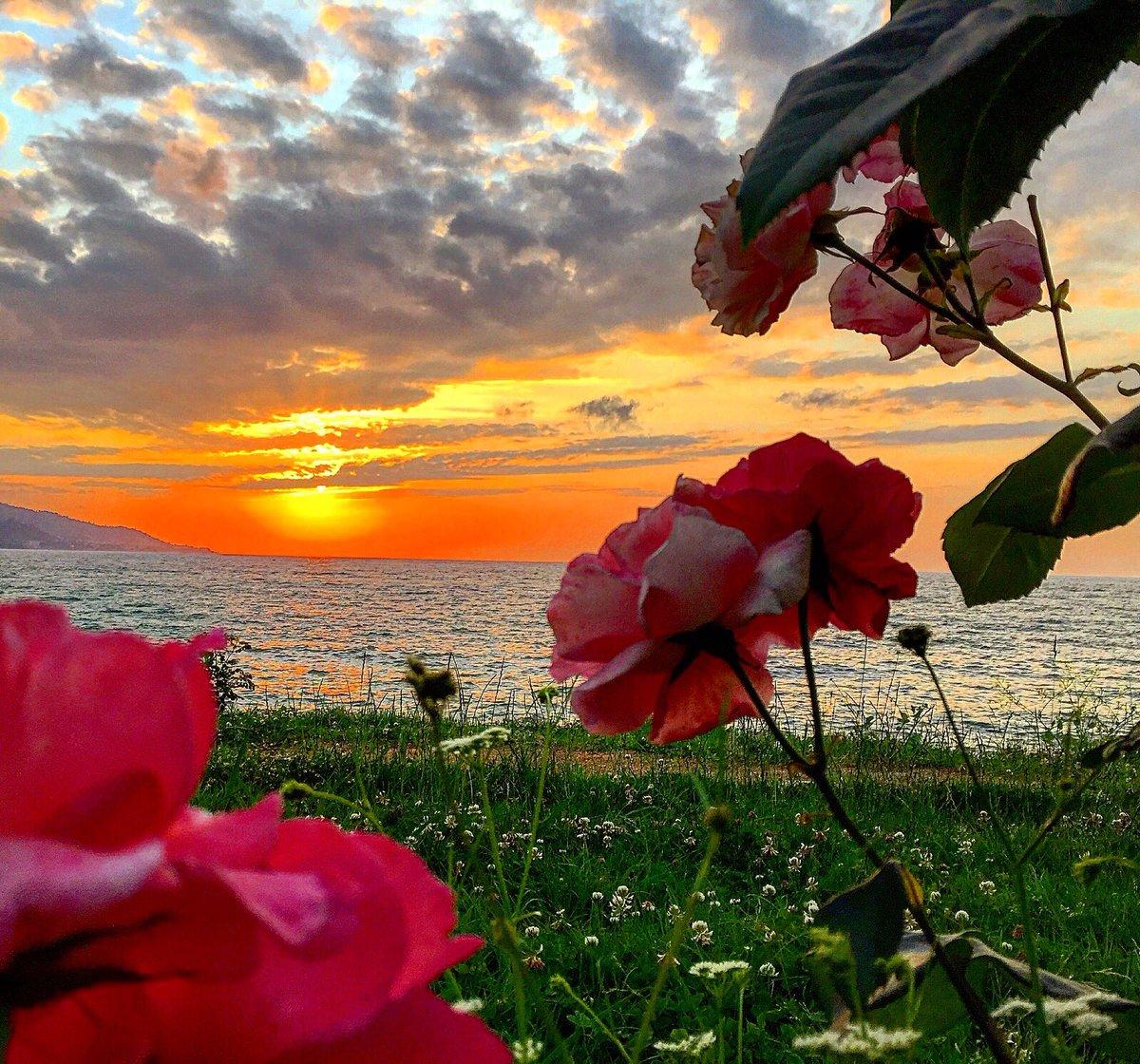 JFB? 𝒓𝒐𝒔𝒂. on Twitter: 로제 업데이트; #nature #sky #sea #beach #beautiful #pretty  #flowers #rose #green #white #clouds #beauty #love #view #peace #Sunset  #Sunsetlovers #Naturelovers #myphoto