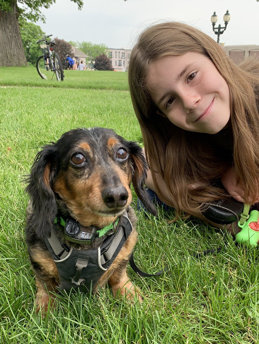I pet Oscar. He is a 12 year old Dachshund. His 1st caregiver died. He went to a new home, but they couldn't keep him. Now he's with a caregiver who is keeping him. Oscar is very attached and loyal to her. He follows her around. When he runs, it looks like a bunny hopping.