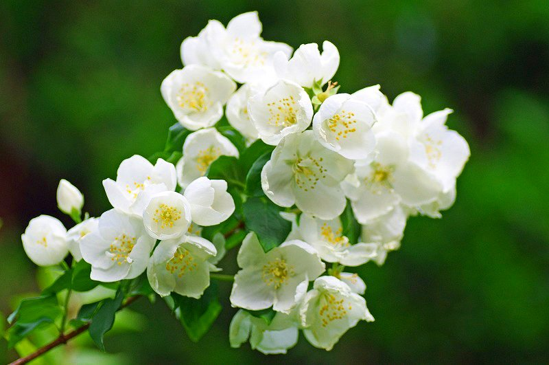 🌅6月4日(火)🌅 AM6:38 🔸 🌿🌼🌿Good Morning🌿🌼🌿 🔸 🌼誕生花🎂6/4 【ウツギ】 🔸 🌼花言葉 「秘密」「古風」「風情」 ・ ・ #Goodmorning #誕生花 #ウツギ #花言葉 #秘密 #古風 #風情 #白い花 #6月4日