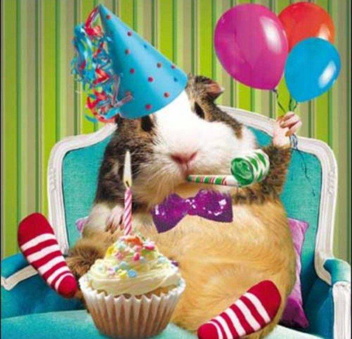 Картинки с днем рождения с морской свинкой