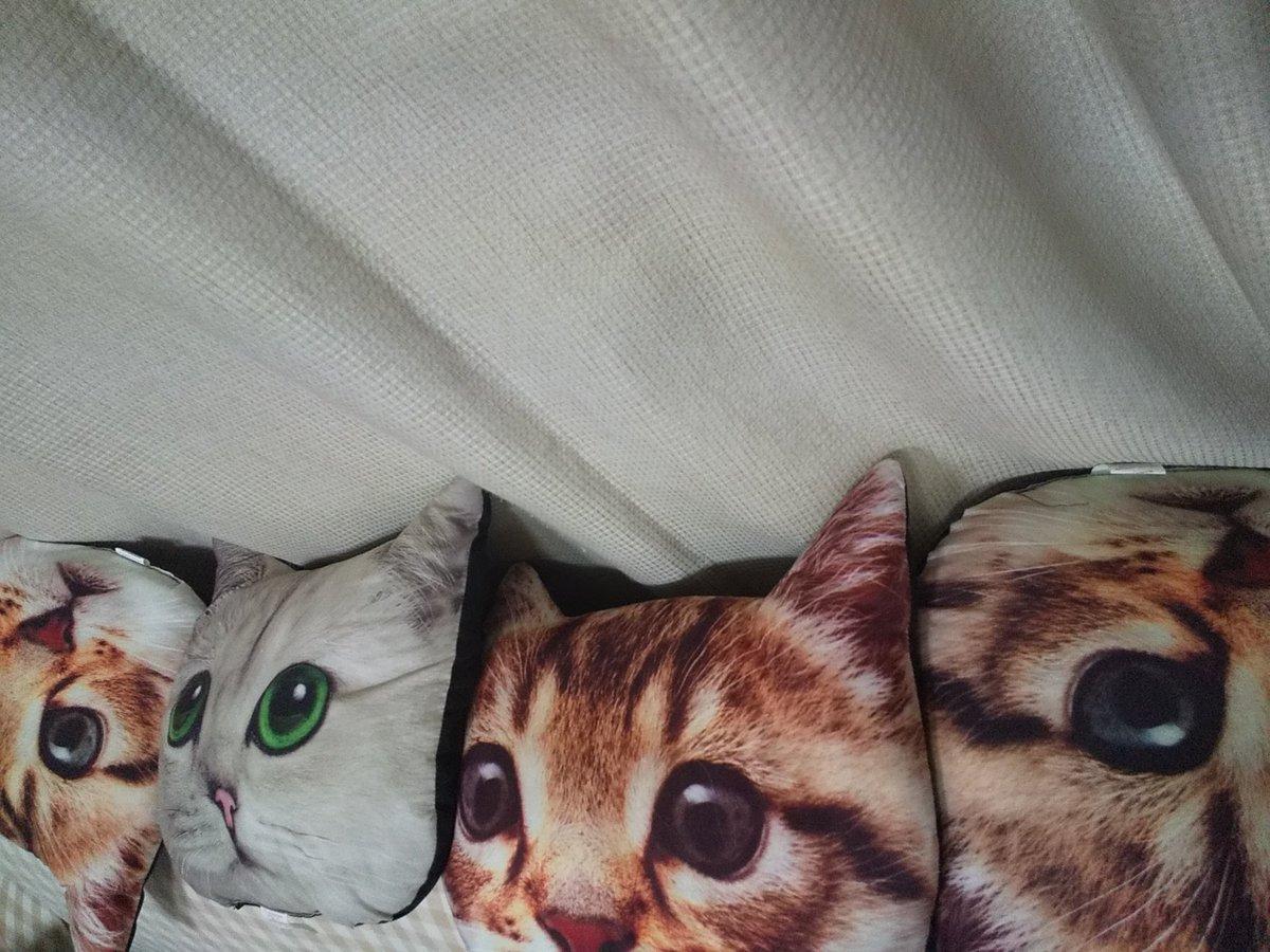 test ツイッターメディア - うちん家のソファ  #猫 #ネコ #ねこ #寝子  #ダイソー https://t.co/fbK17CMKQz