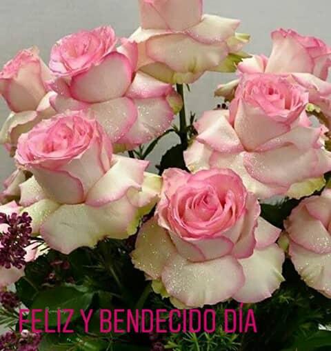 Reyna Sánchez على تويتر Unas Rosas Bellas Para Una Niña