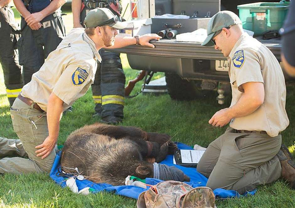 A bear was safely removed from the UC Davis campus after it was spotted roaming the southeast corner of school property.  https://trib.al/mf0TBx8