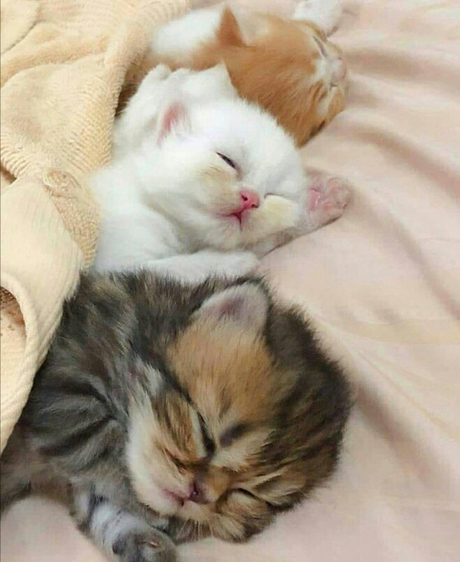 картинки сладко спящего высокоурожаен, при