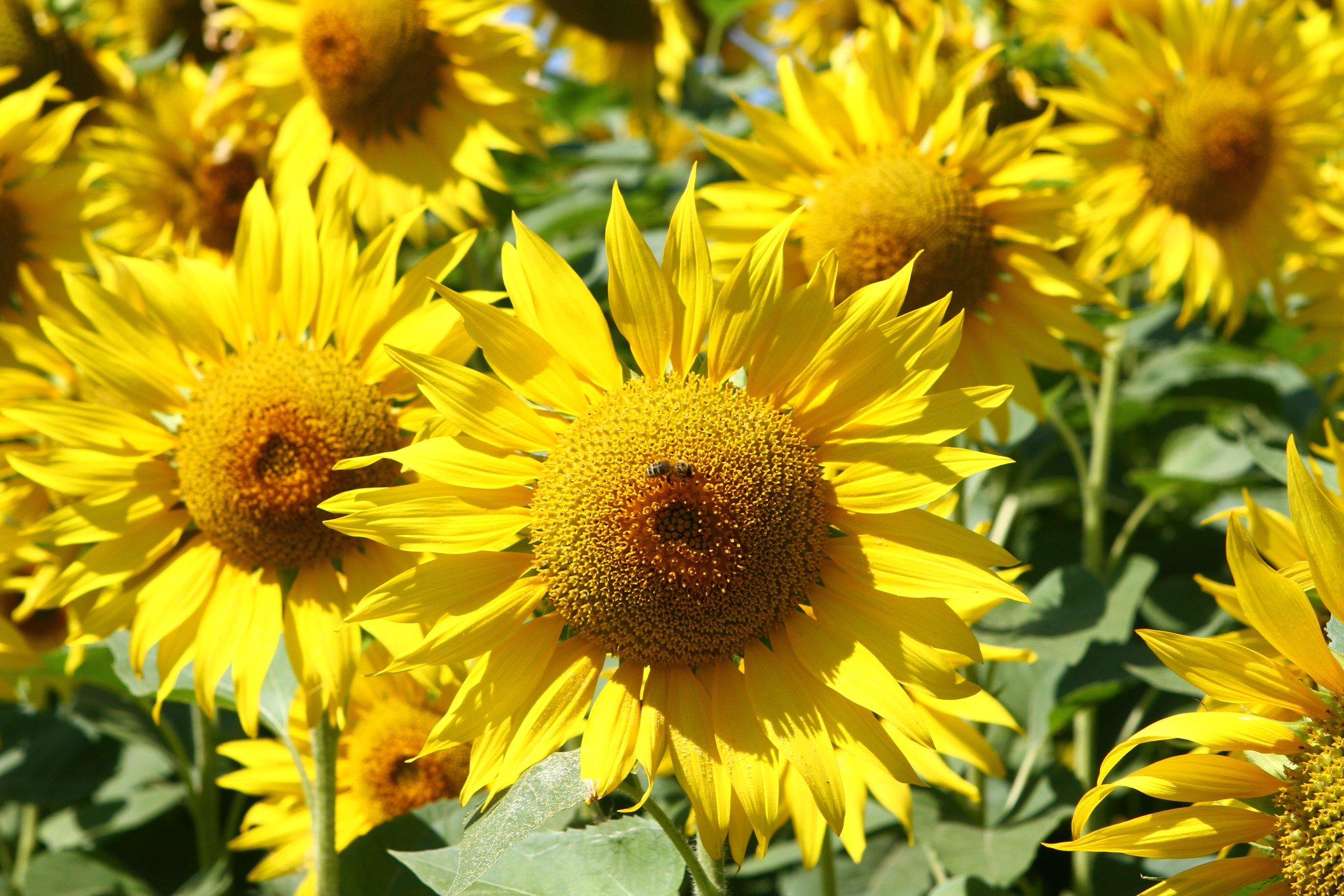 наступлением весны масличные растения фото и названия того эти рок-музыканты