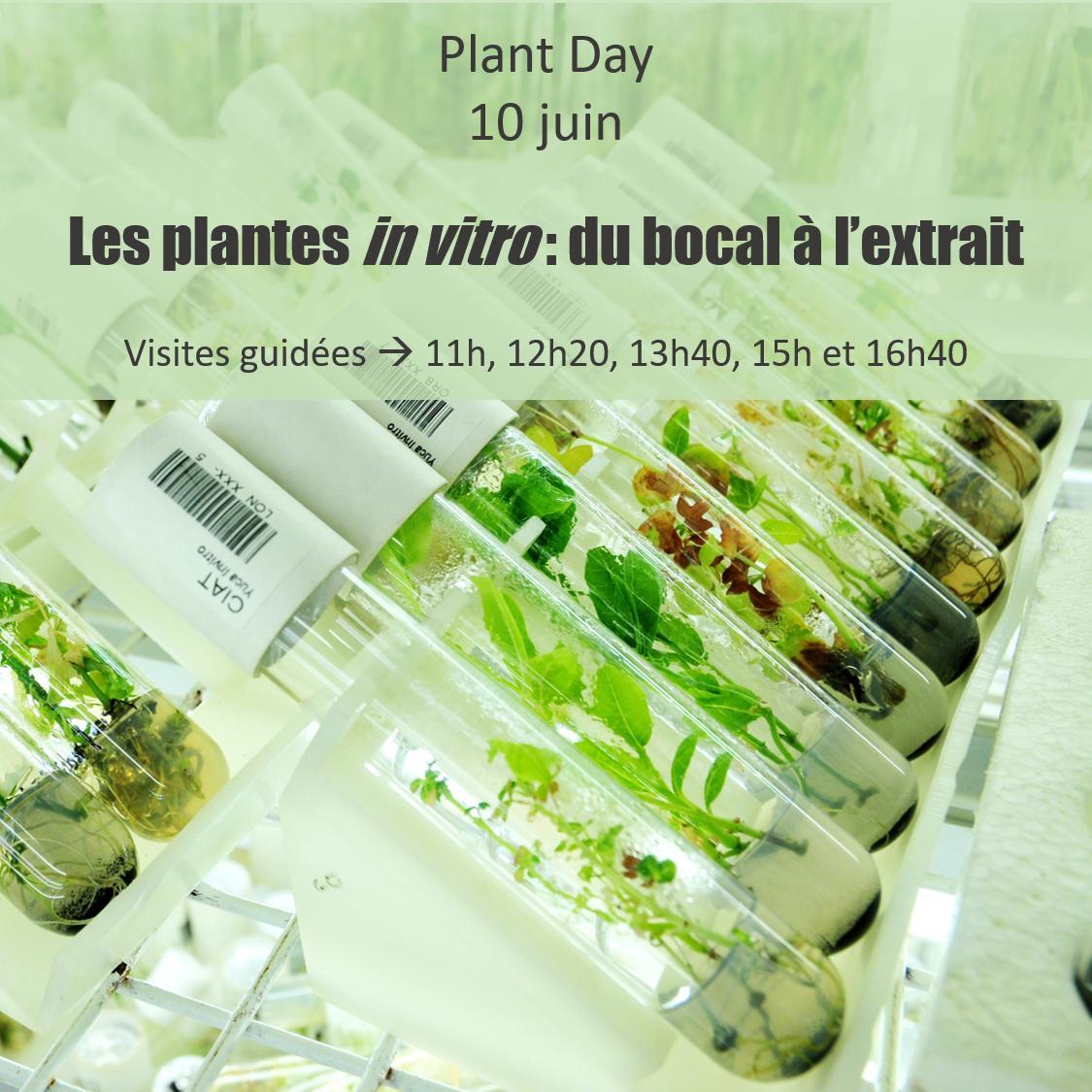 Découvrez le monde des plantes #invitro, ces petites plantes en bocaux. 🌱🌱🌱 Comment les cultive-t-on ? À quoi servent-elles ?  Le 10 juin, #PlantDay Institut de Botanique, B22, @UniversiteLiege Faculté des Sciences. http://www.events.uliege.be/plantday/programme/…