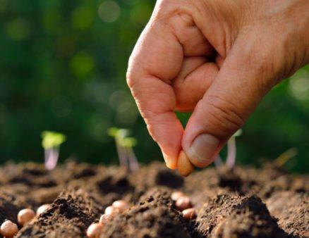 En el #DíaMundialDelMedioAmbiente recordamos nuestra apuesta por la #AlimentaciónSostenible para evitar la pérdida de biodiversidad, frenar calentamiento climático y reducir las desigualdades sociales Más información 👉 https://bit.ly/2HLuBja