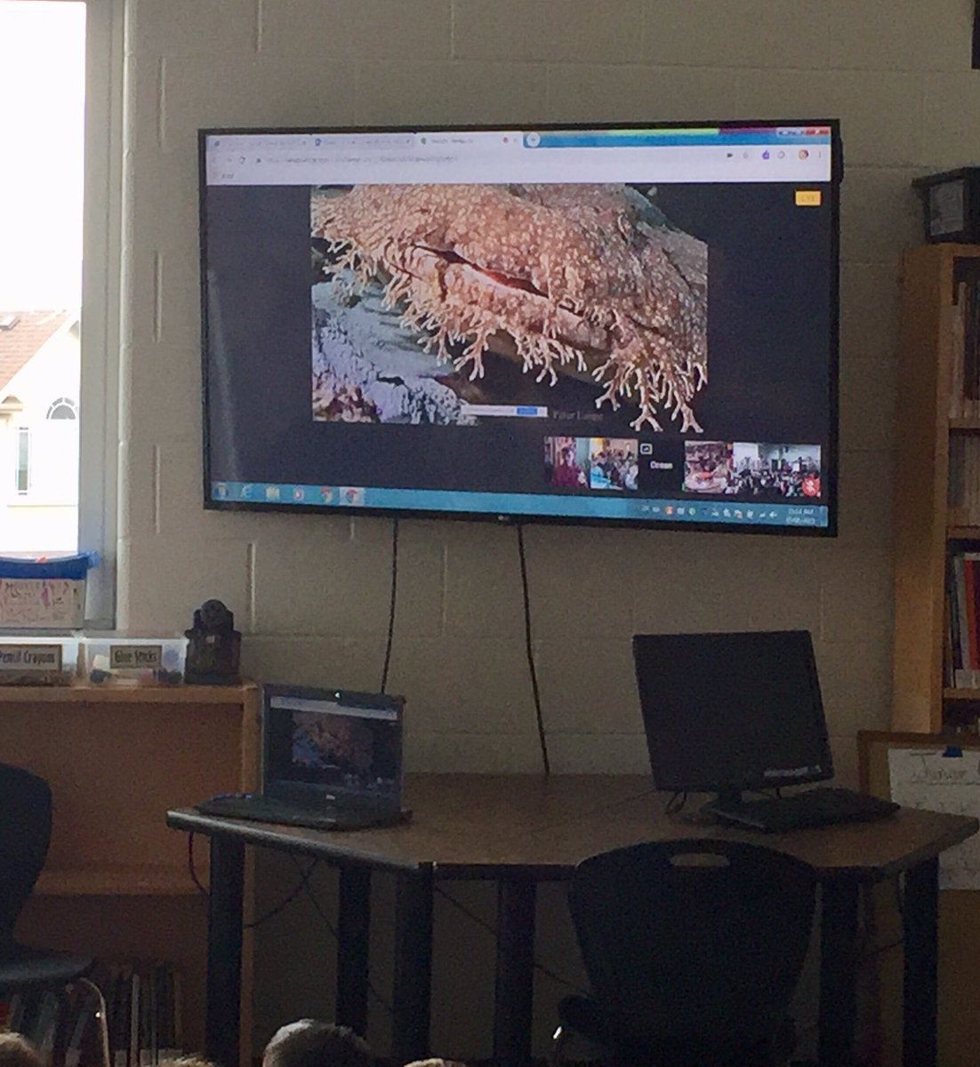 """Wobbegong Sharks are so cool!"" Thank you @OceanWise + @VanAqua for leading us in such a cool exploration of marine life camouflage! Our kindi + Gr. 4s (80+ of them!) are taking the challenge to observe camouflage in our backyards. @EBTSOYP #ExploringByTheSeat @wmwtrailblazers"