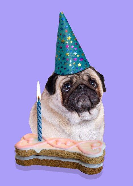 С днем рождения открытка мопсы