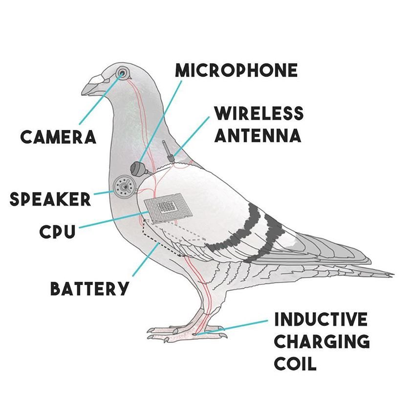 Pigeon drone with labeled parts called camera, speaker, cpu, battery, inductive charging coil, microphone, and wireless antenna