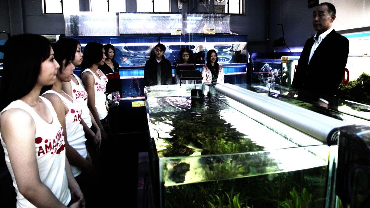 「冷たい熱帯魚」の画像検索結果