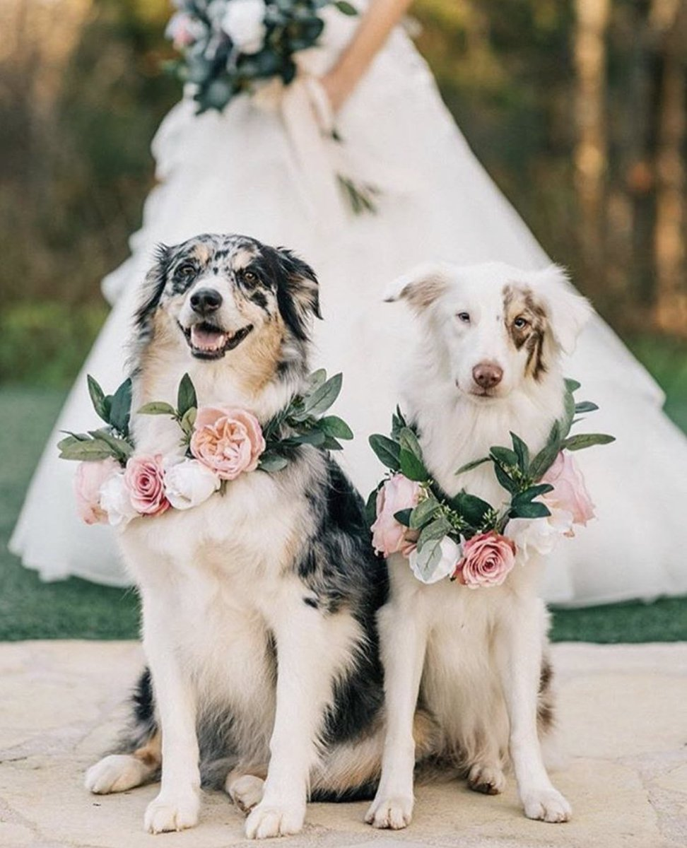 Did you have your pet at your wedding, do you plan to?  Here at Rosewood we couldn't imagine our best friends not being with us on our big day🐶❤️🐾  📸: @afloral     #Rosewoodpet #wedding #dogsatweddings #bridespup #love #cute #pupfectday #dogs #pets #fureverafter