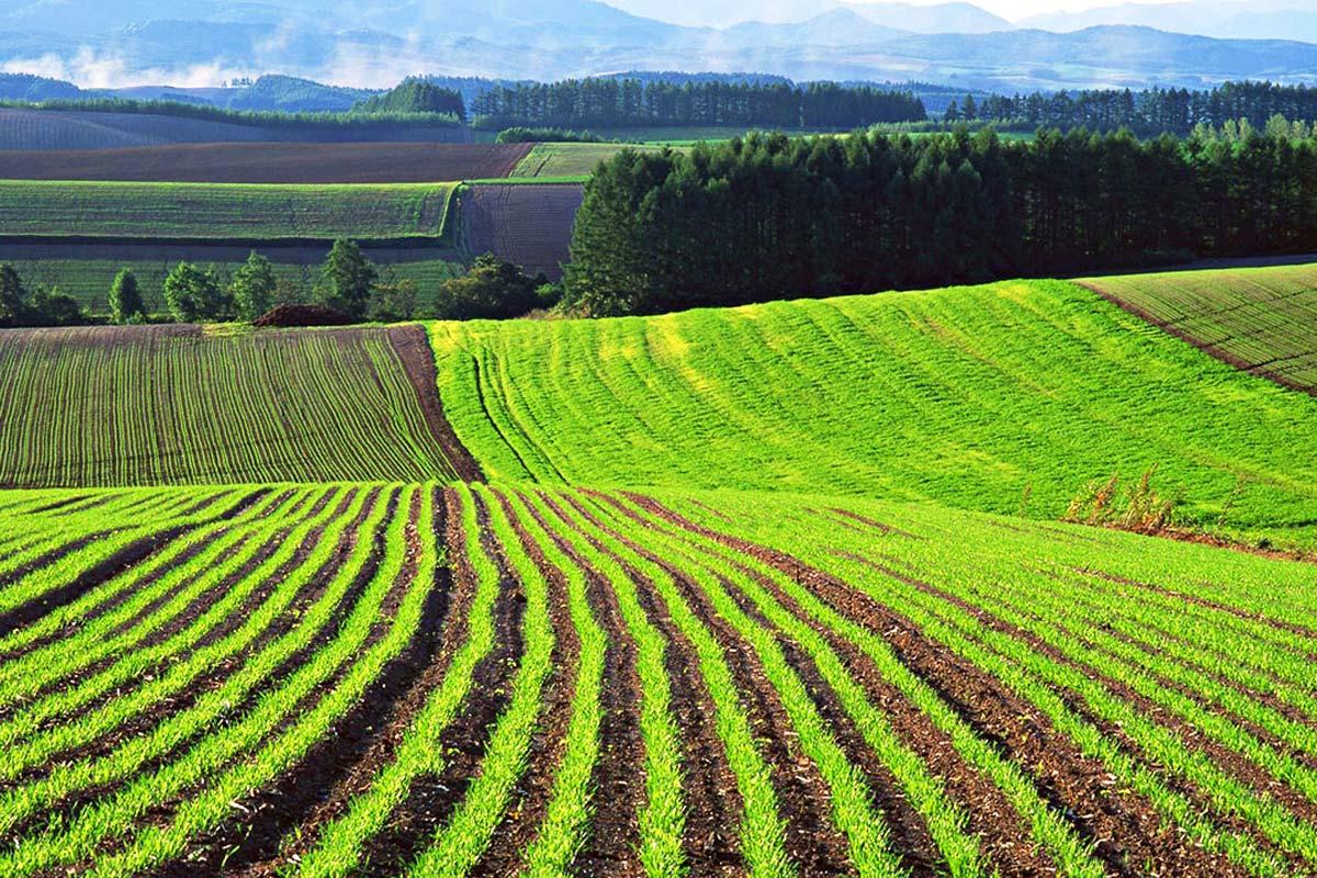 земля как объект земельных ресурсов