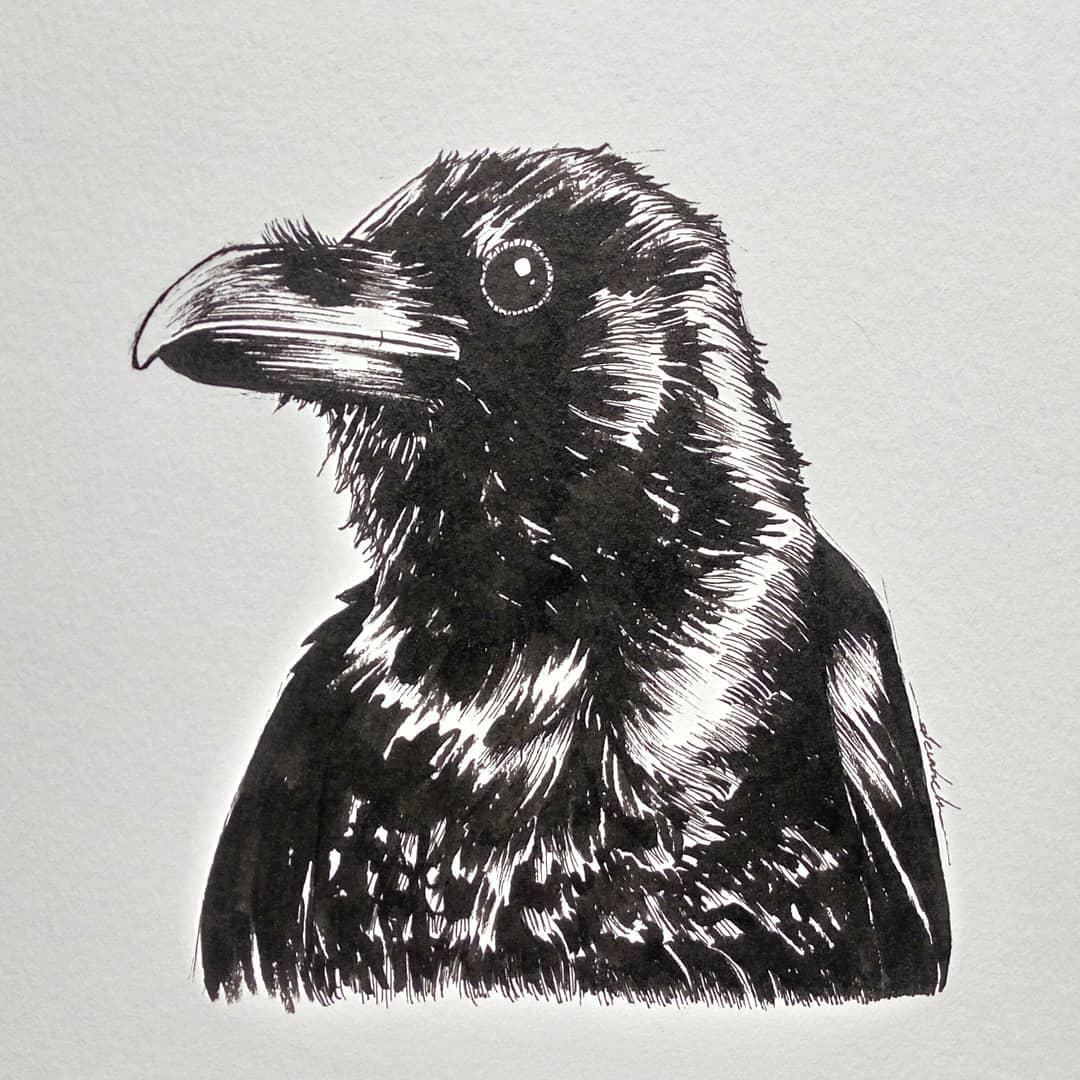 Raven #dailyart #dailyillustration #bird #raven #animal #portrait #blackandwhitedrawing https://t.co/jE7Gb5v2CF