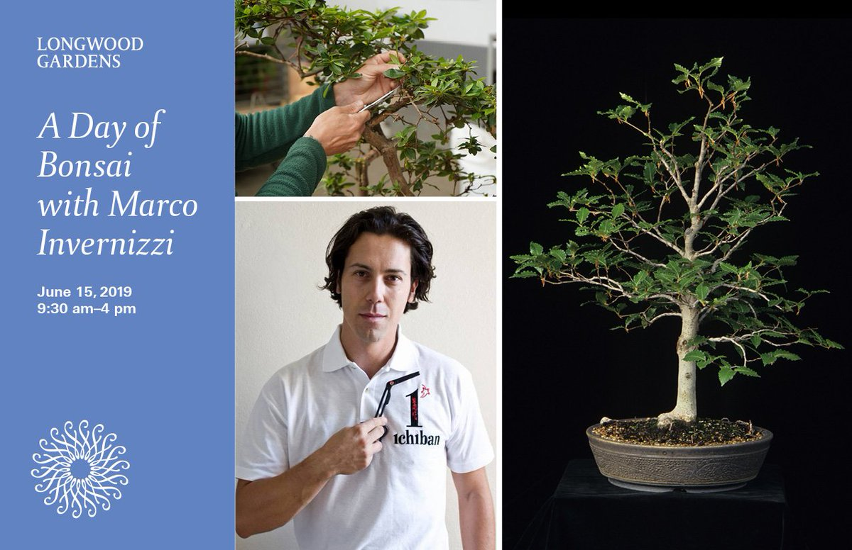 Longwoodgardens On Twitter Internationally Renowned Bonsai Artist Marco Invernizzi Puts The World Of Bonsai At Your Fingertips With A Two Part Lecture And Demonstration On June 15 Learn Wiring Pruning Styling Techniques And
