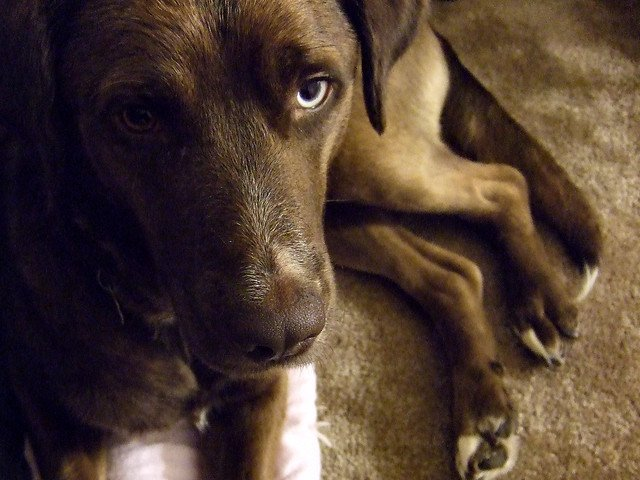 When humans feel anxious, their dogs do as well.
