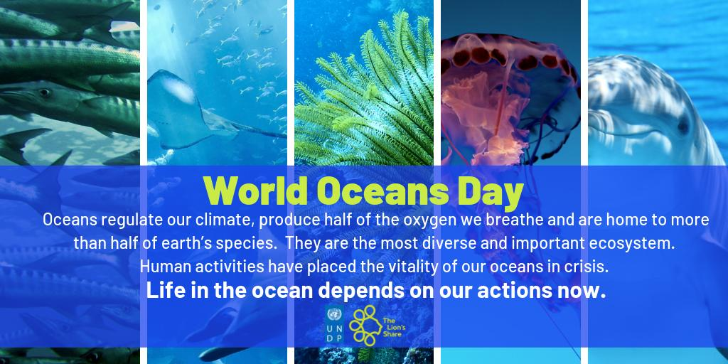 #WorldOceansDay  The ocean is the most diverse and important ecosystem on the planet.  It is home to more than half of earth's biodiversity.  The #LionsShare supports ocean health and conservation of marine species, including coral reefs.  🌊 #SaveOurOcean #BeatPlasticPollution