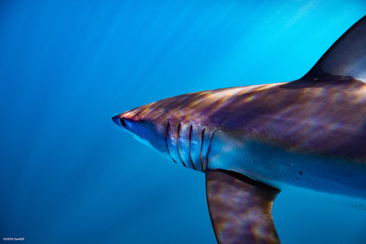@TheWCS's photo on Sharks
