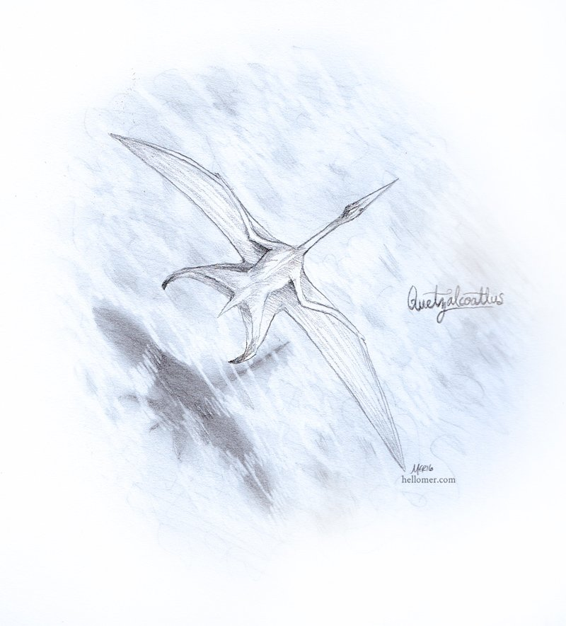 Top down study of a Quetzalcoatlus, which is (repeat after me, folks) Not A Dinosaur! It's a flying reptile. ;)  -- #JurassicJune #PaleoArt #NotADinosaur