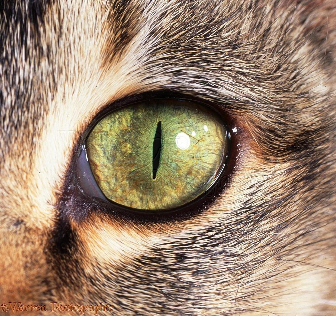 картинка про кота с глазами если это