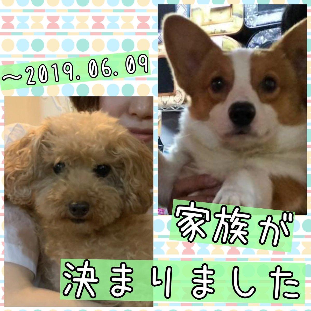 保護犬カフェ 鶴橋店 A Twitter 家族が決まりました トイ
