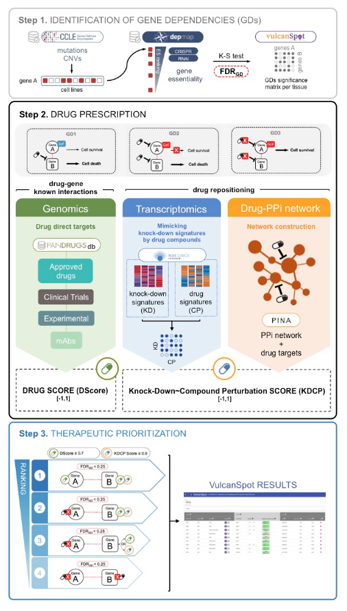 VulcanSpot, our novel a tool to prioritize therapeutic vulnerabilities in cancer has been published in Bioinformatics journal: https://bit.ly/2K7LB4u   Try VulcanSpot here ---> http://www.vulcanspot.org . Congrats to @BU_CNIO staff and co-authors @OxfordJournals @CNIO_Cancer