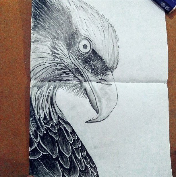 eaglehead hashtag on Twitter
